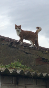 Cat 53 2017