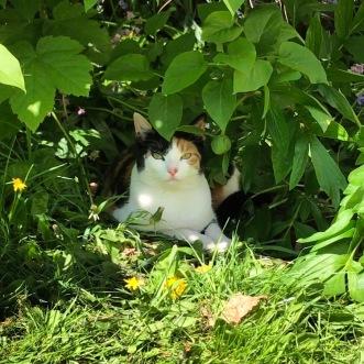 Cat 61 2017