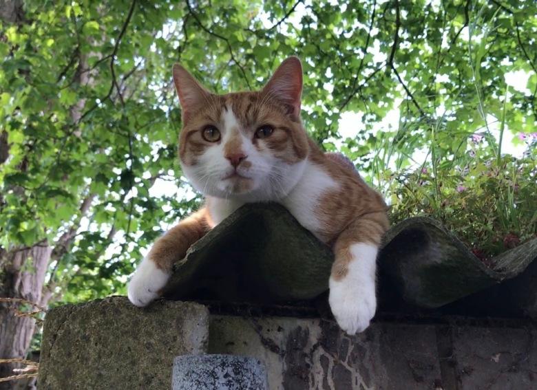 cat may2