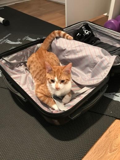 img_7149-suitcase